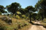 Paisajes de pinares para el senderismo en Ávila