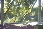 foto3 Casa Rural Luna Candeleda