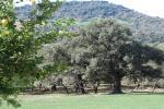 El Bosque. Casa Azahar