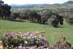foto El Bosque. Casa Azahar