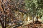 foto Bungalows El Viejo Alcornoque
