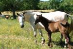 foto2 Posada del Serengue