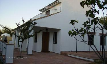 Olivar de Abuelos en Arriate (Málaga)