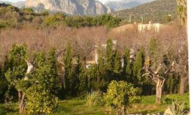 Finca Lorenzo en Consell (Mallorca)