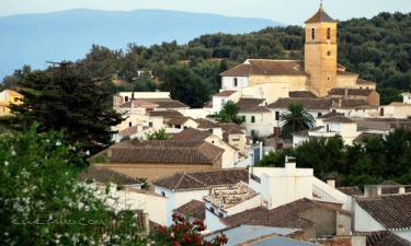 Pinos del Valle: