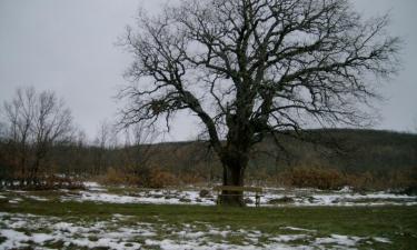 Cueva de Agreda:  Paisaje de invierno en Cueva de Agreda