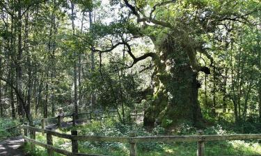 Listado alojamientos rurales en Robledales de Ultzama Basaburua y Bosque de Orgi
