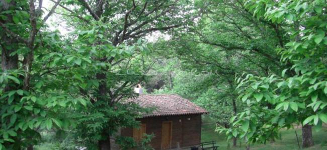 foto Casa Rural Cabañas de Tentudía