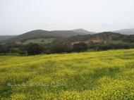 Sierra de Tentudia en Calera de León (Badajoz)