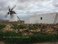 Llanos de la Concepción