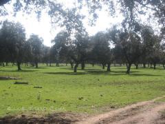 Alojamientos Parque Natural de la Sierra de Hornachuelos