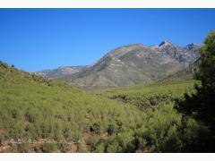 Alojamientos Sierra de Cardeña y Montoro