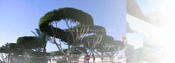 Foto de San Fulgencio