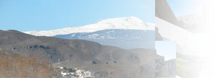 Foto de Alcaudique