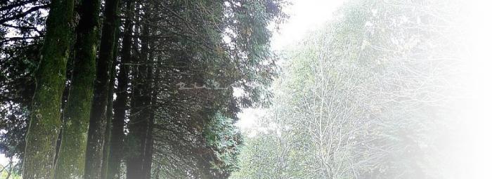 Foto de Parque de Cotorredondo y Lago de Castiñeiras