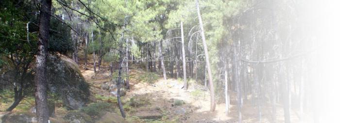 Foto de Reserva Natural del Valle de Iruelas