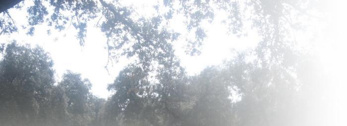Foto de Parque Natural de la Sierra de Hornachuelos