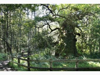 Robledales de Ultzama Basaburua y Bosque de Orgi