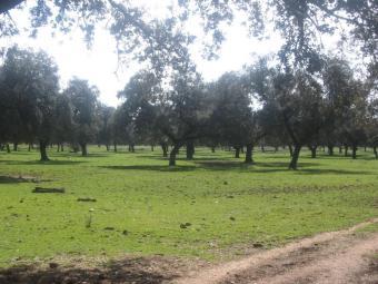 Parque Natural de la Sierra de Hornachuelos